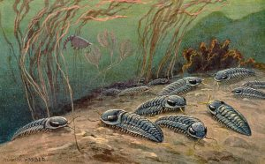 The trilobites are crawling over the sea floor
