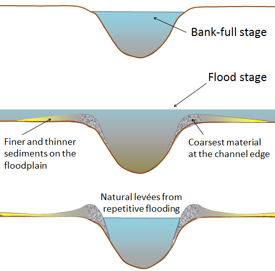 Profile of stream channel at bankfull stage, flood stage, and deposition of natural levee (Earle 2015).