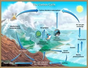 Figure shows how carbon moves between reservoirs such as the ocean, atmosphere, biosphere, and geosphere.