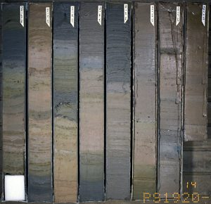 Image of sediment core showing clear layering and vertical changes in color and composition.