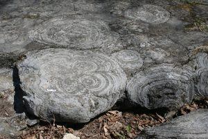 Round structures of grey limestone are remnants of the blobby nature of the living stromatolites, fossilized in rock.