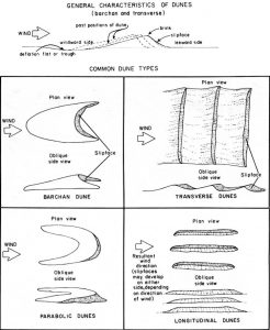The chart has the way dunes are made and four dune types.