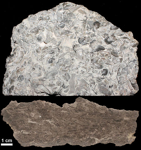 Rock has many fossils throughout