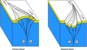 Flower structures created by strike-slip faults. Depending on the relative movement in relation to the bend in the fault, flower structures can create basins or mountains.