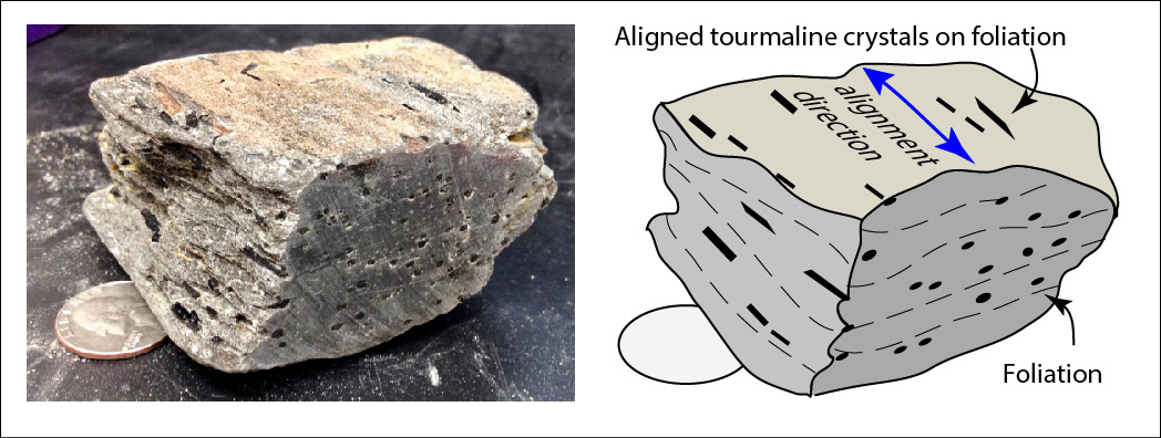 """Aligned tourmaline crystals in line with foliation. Foliation is the fine """"layers"""" of the rock."""