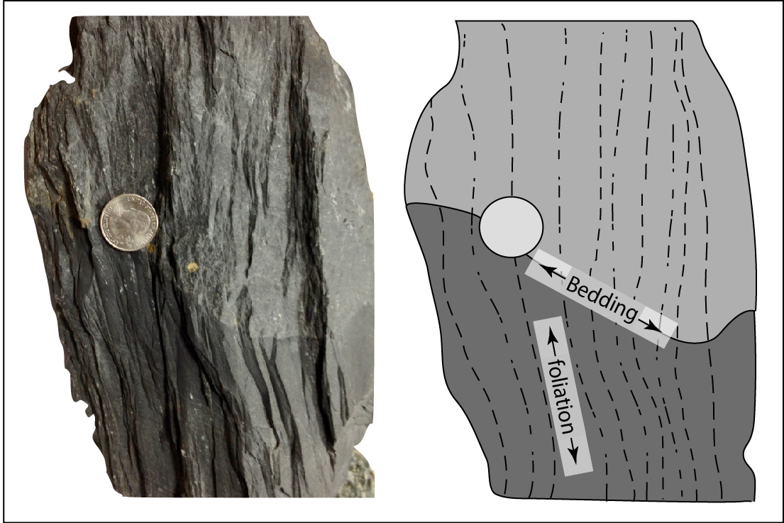 Foliation is caused by metamorphism. Bedding is a result of sedimentary processes. They do not have to align.